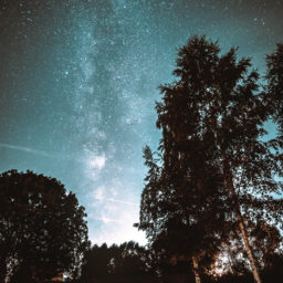 Photograph of the Night Sky through trees
